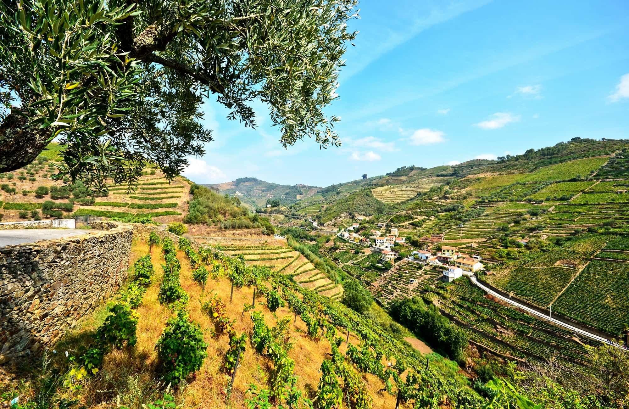 Rizières de vignes parcourant le Douro