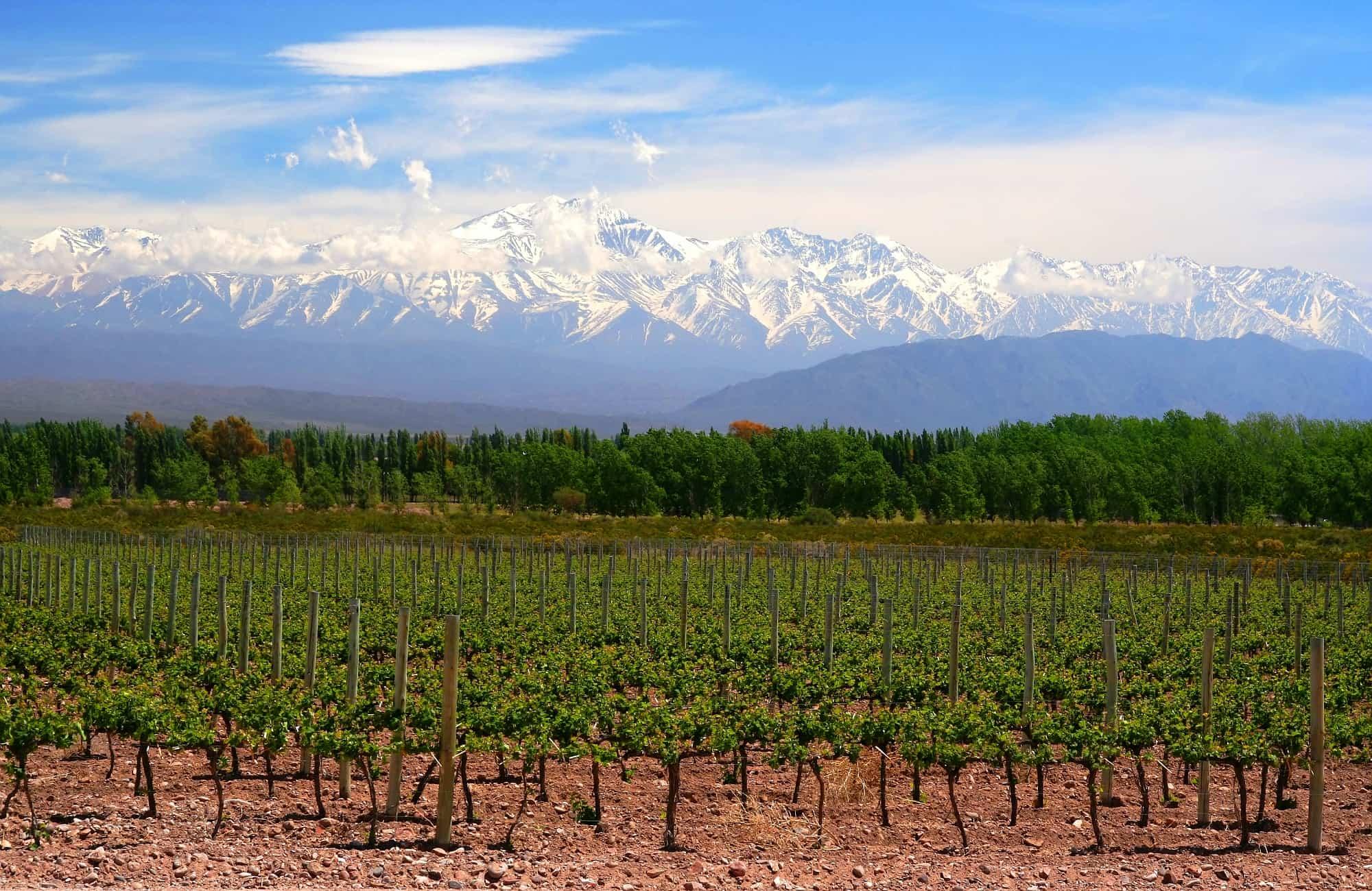 région de Mendoza, capitale du vin argentin