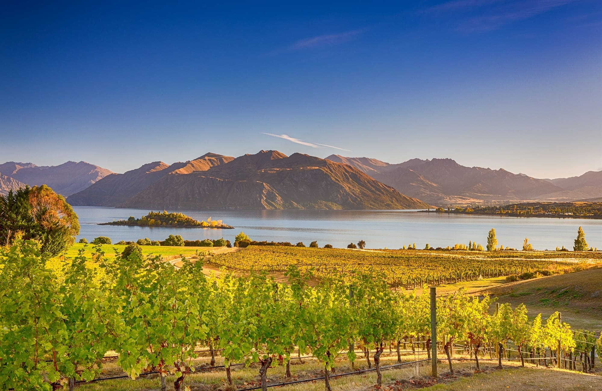 De jolis vignobles entourant le lac Wanaka.