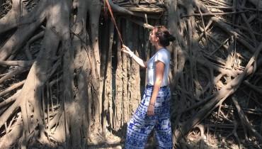 Voyage à Taïwan - Anping tree house - Amplitudes