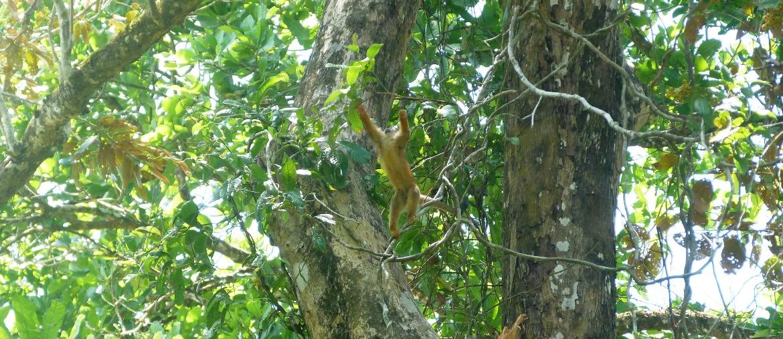 Voyage au Costa Rica pendant l'eductour de Juliette