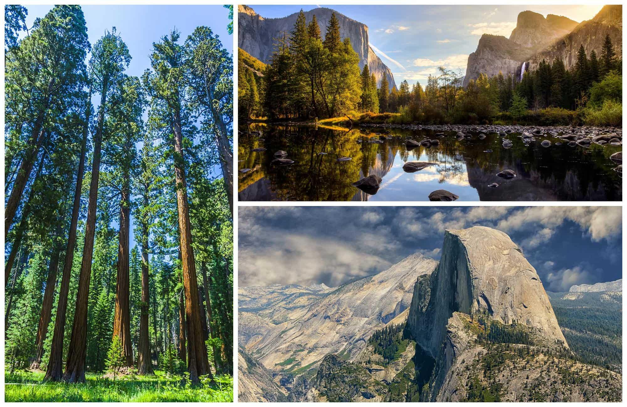 séquoias géants, Tunnel View et lac dans le parc Yosemite