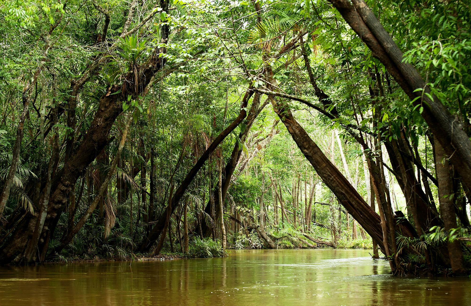 Voyage au Brésil - Foret amazonienne - Amplitudes