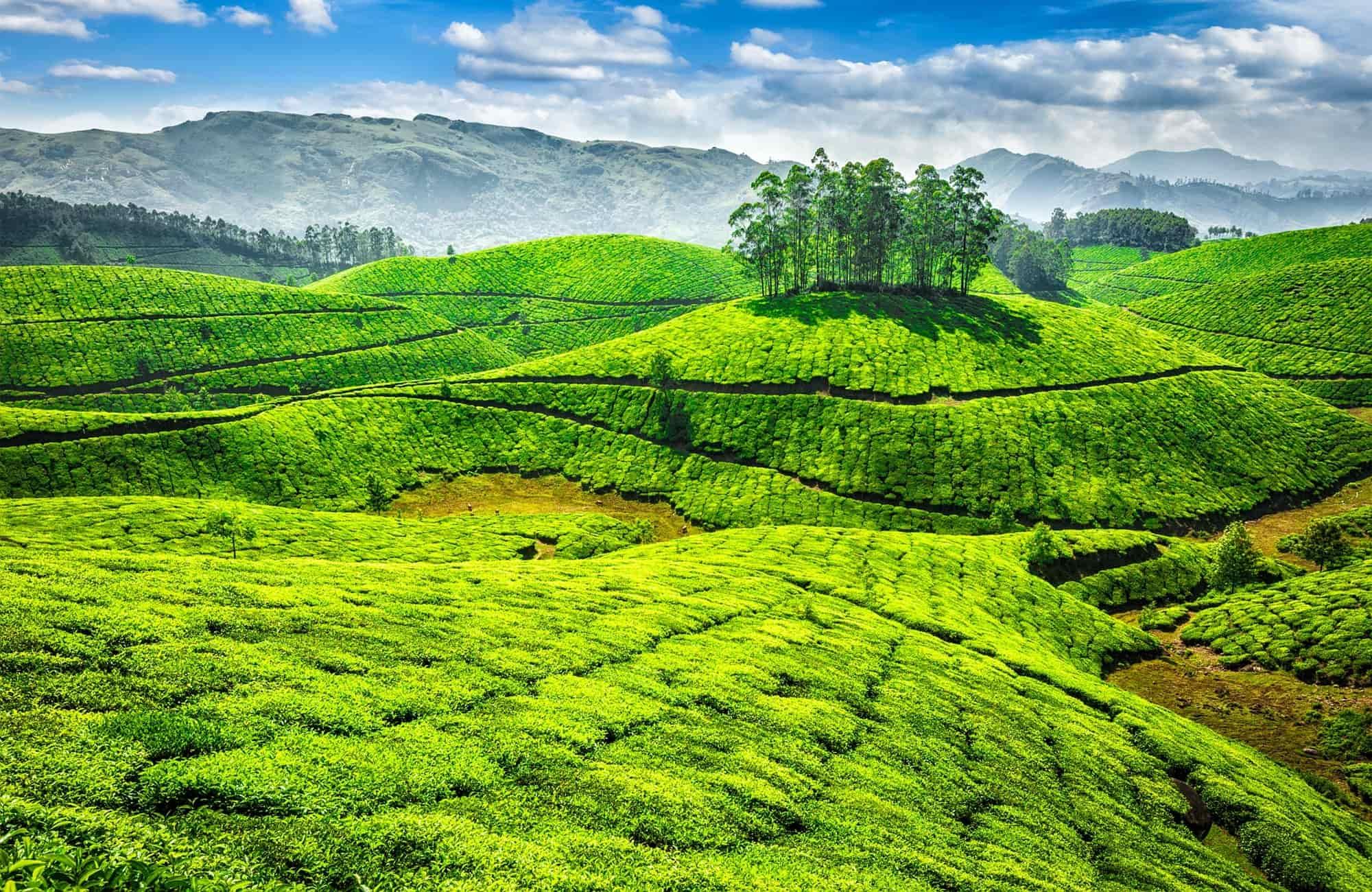Voyage au Kerala - Munnar - Amplitudes