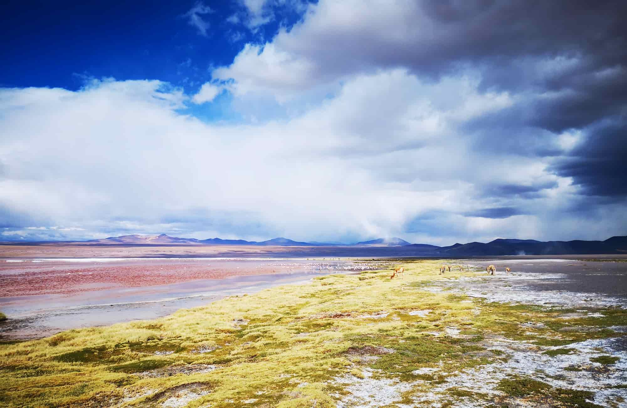 La laguna colorada, la laguna verde ou la laguna blanca : les lagunes du Sud Lipez se parent de milles couleurs.