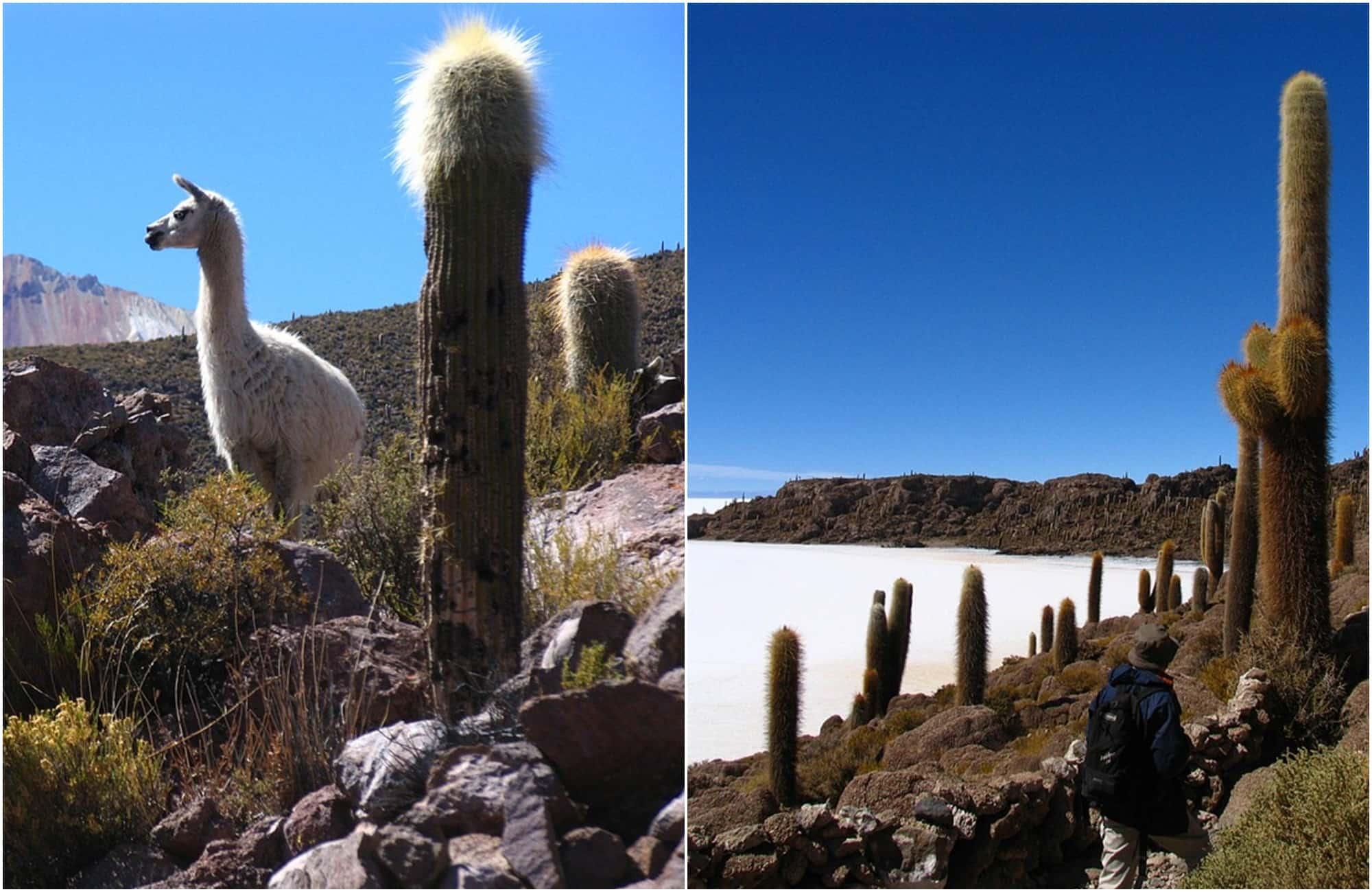 Découvrez l'île d'Incahuasi au cœur du salar d'Uyuni, ses cactus géants et ses vues panoramiques.