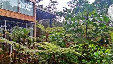 Voyage en Équateur - Mashpi Lodge - Amplitudes