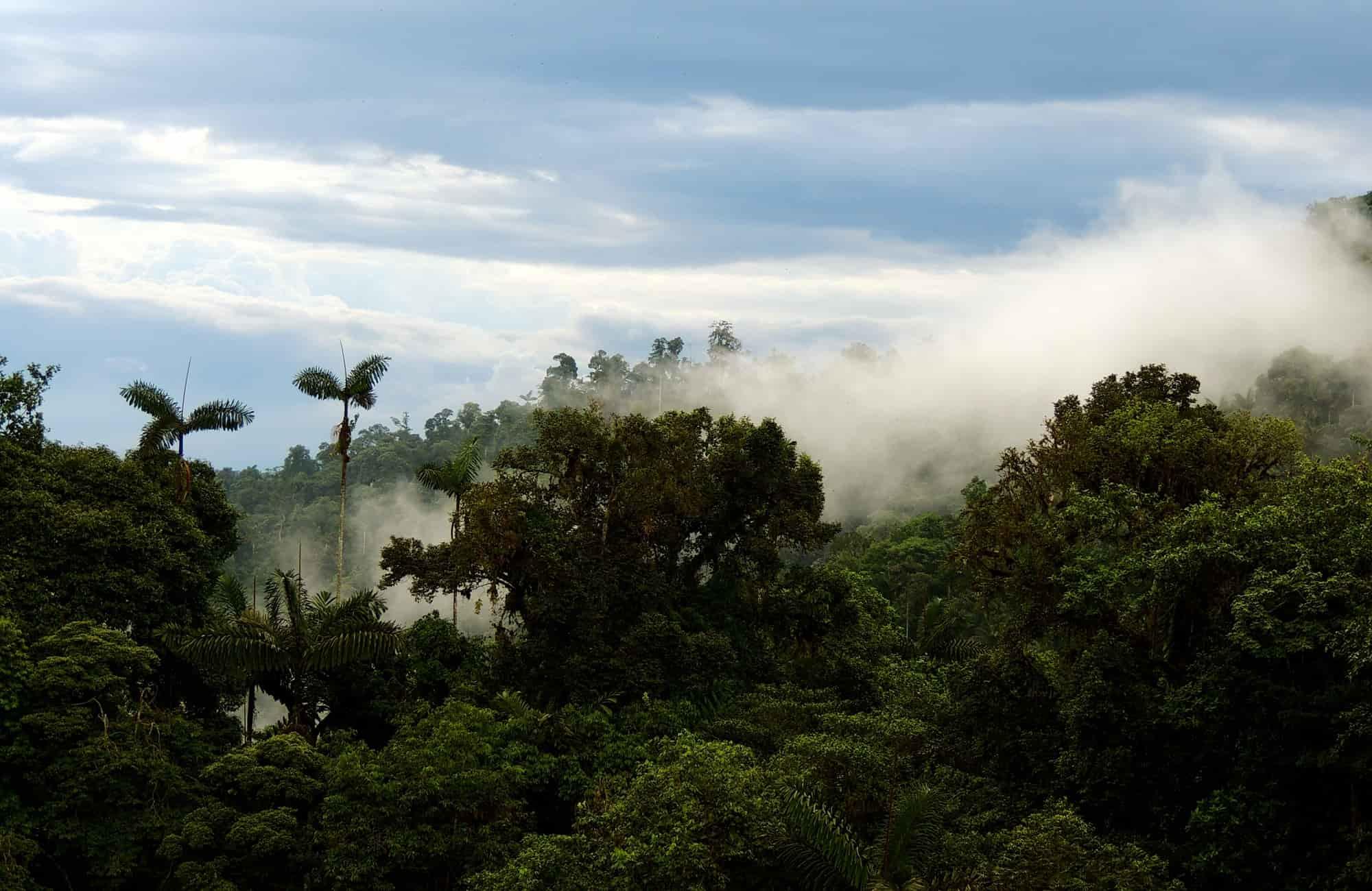 Voyage en Équateur - canopée - Amplitudes