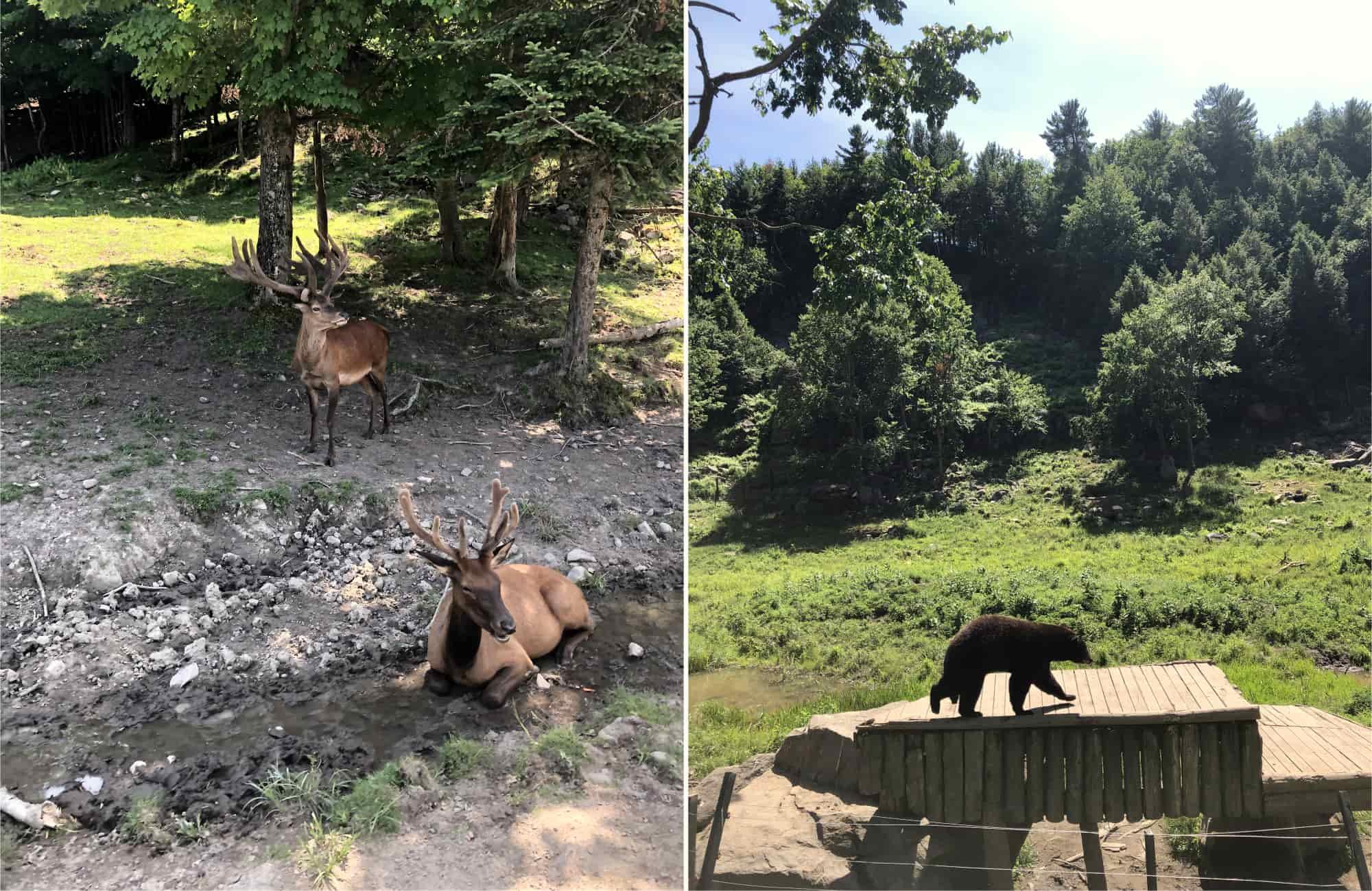 Voyage Québec - Animaux parc Oméga - Amplitudes