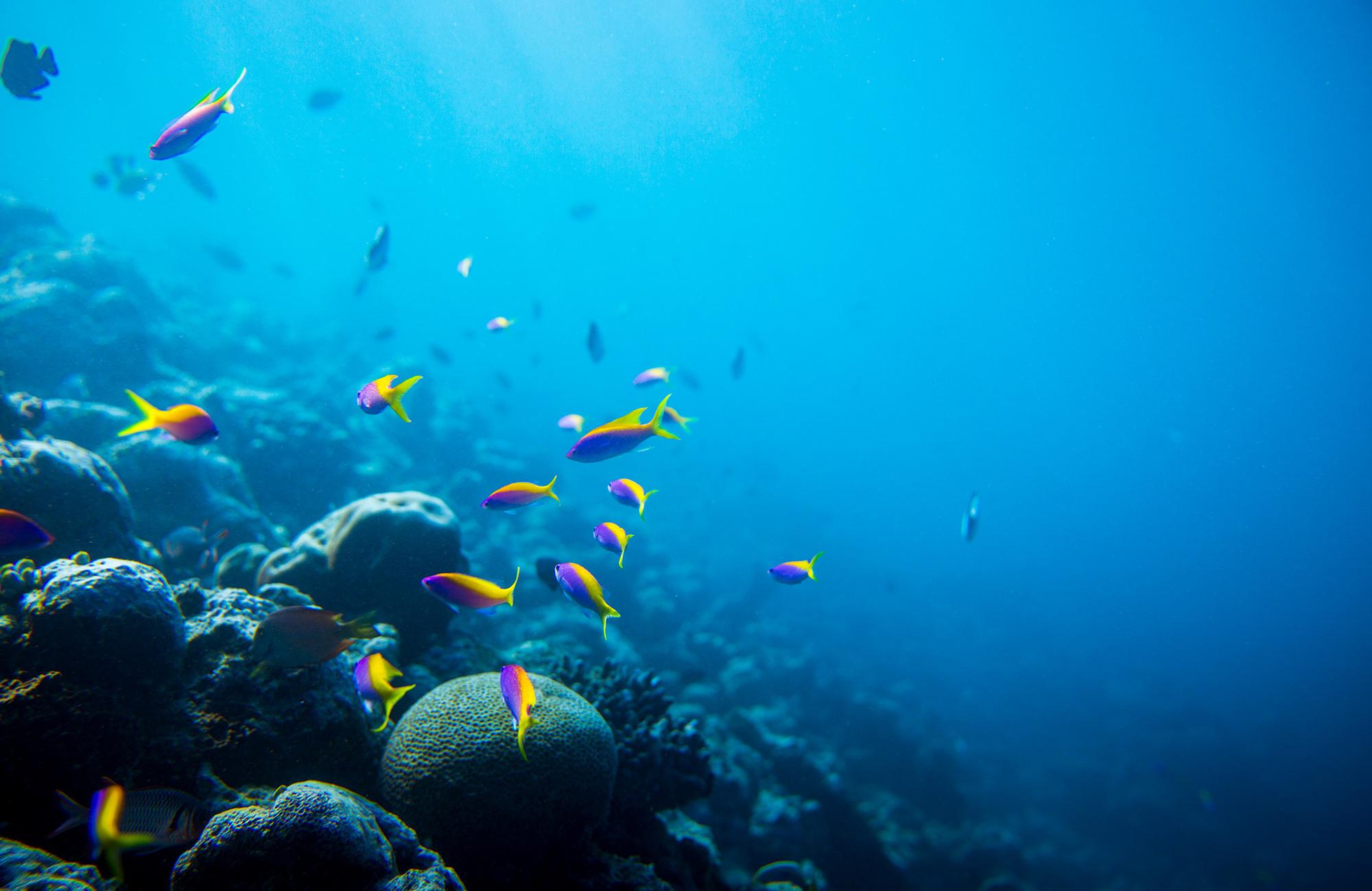 Voyage Maldives - plongée - Amplitudes
