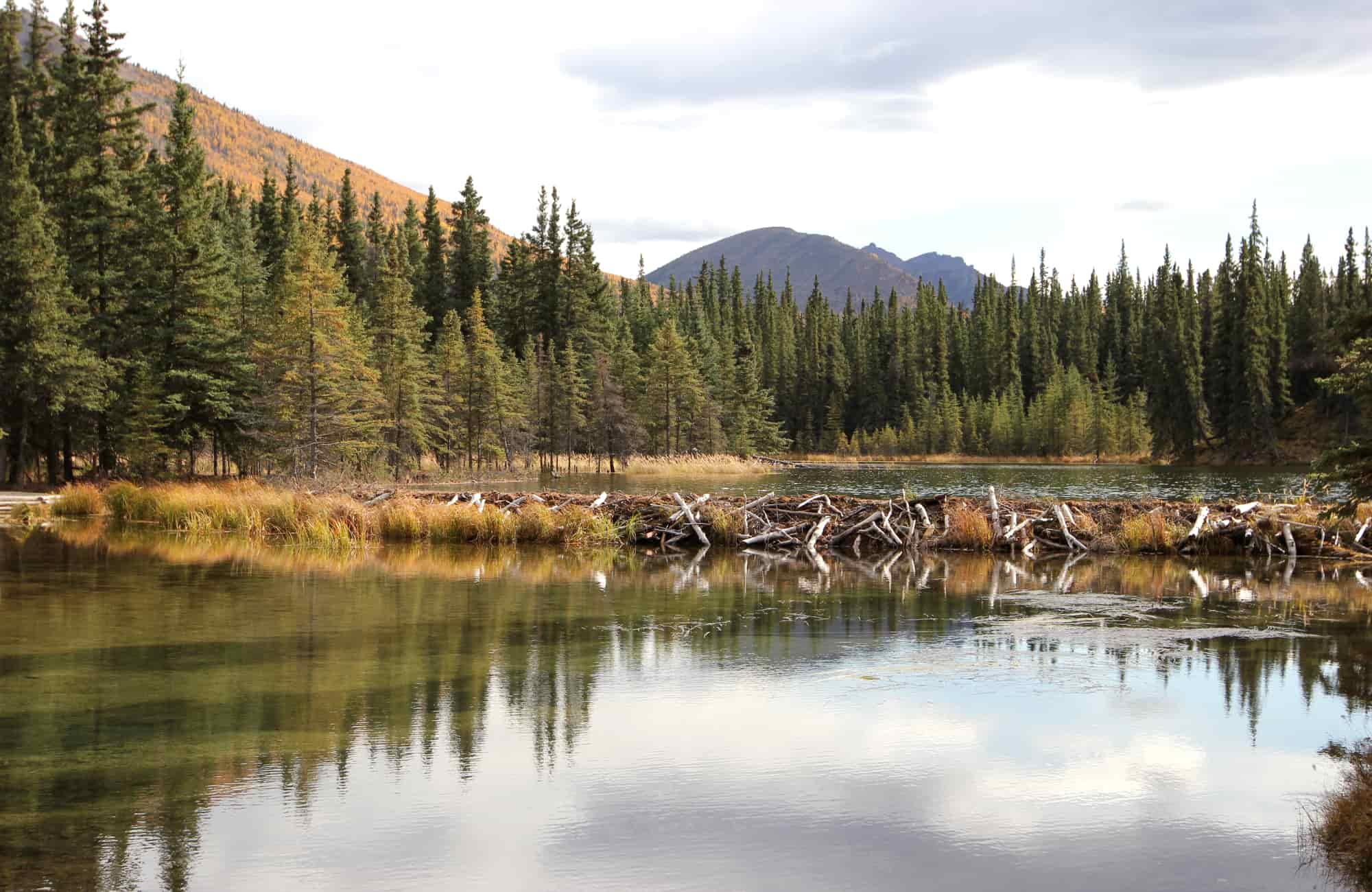 Voyage Alaska - Randonnée au Parc National de Denali - Amplitudes