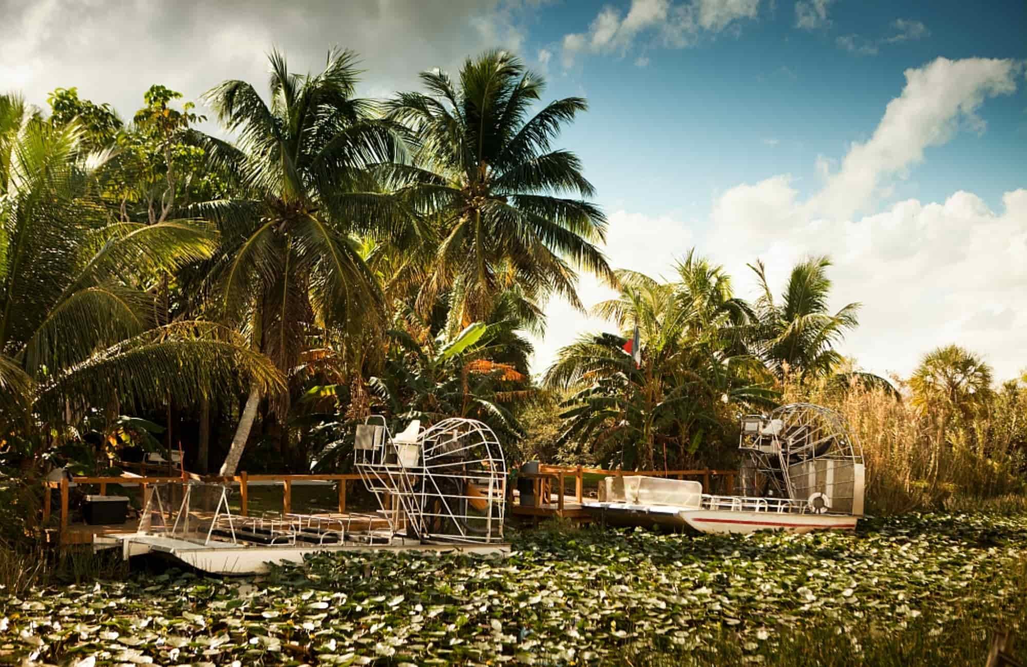 Voyage Floride - Les Everglades- Amplitudes