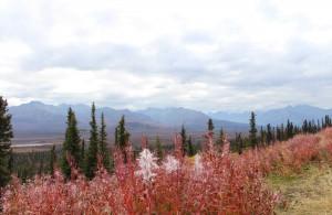 Voyage Alaska - Route de Valdez à Palmer - Amplitudes