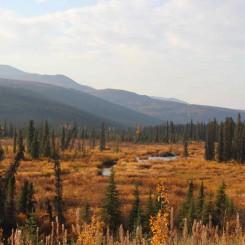 Voyage Alaska - Les grands espaces d'Alaska - Amplitudes