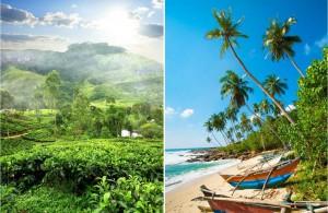 Les plantations de thé de la vallée de Nuwara Eliya et les plages des Maldives