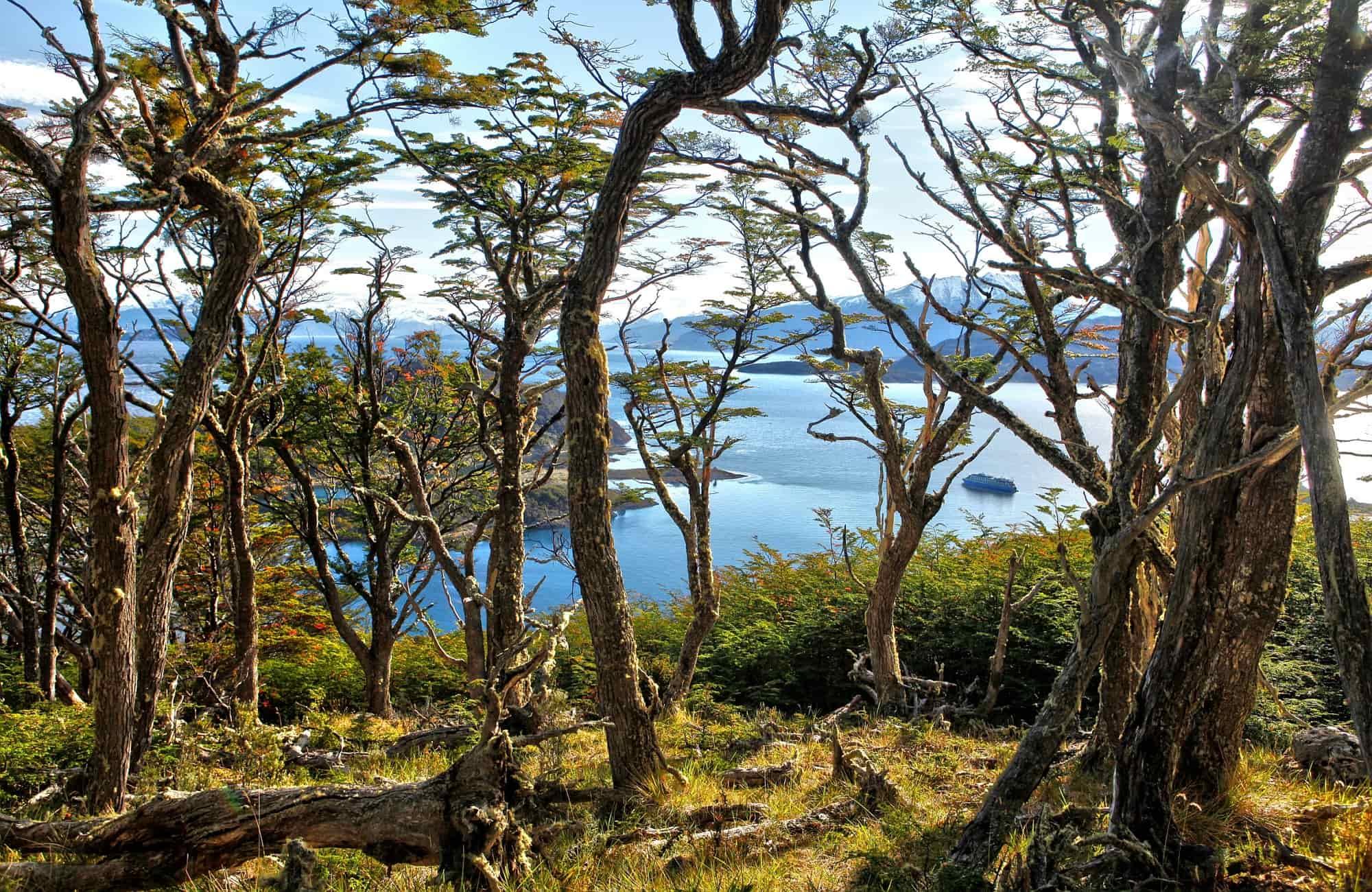 Croisière Ile Navarino - Baie de Wulaia - Amplitudes