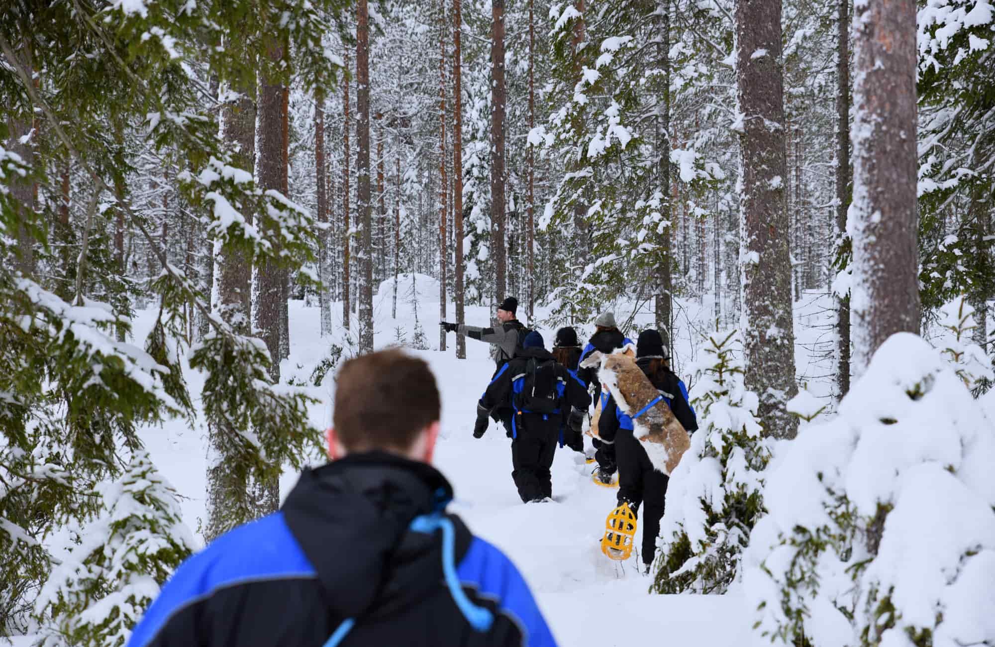 Voyage Laponie - Randonnée en raquettes - Amplitudes
