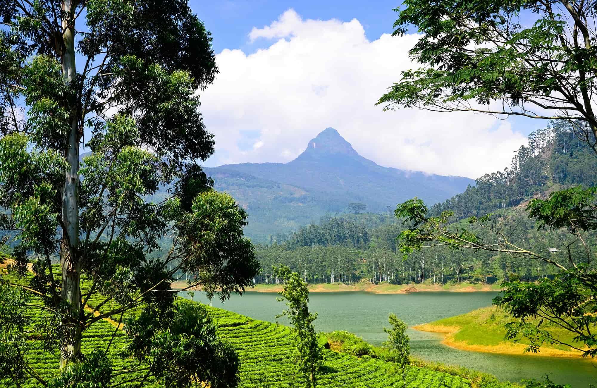 Voyage Sri-Lanka - Les rizières du Sri-Lanka - Amplitudes