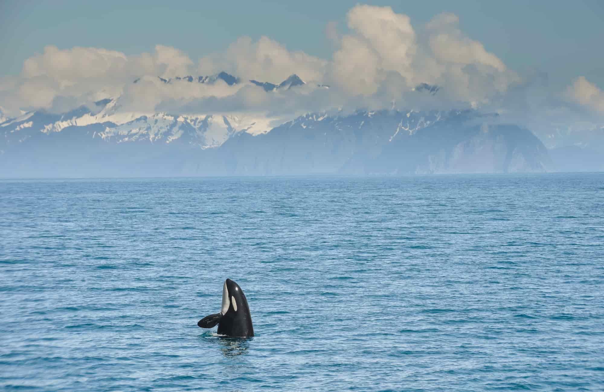 Voyage Eutats-Unis - Alaska Kenai Fjords National Park - Amplitudes