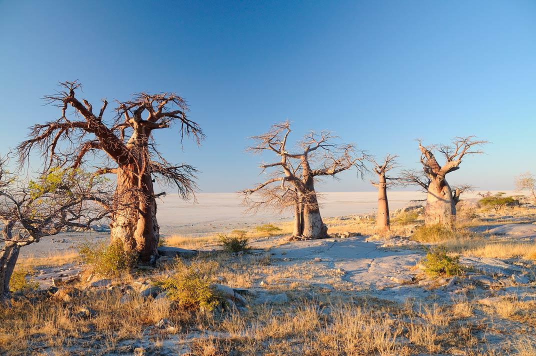 Voyage Botswana - pan de Makgadikgadi - Amplitudes