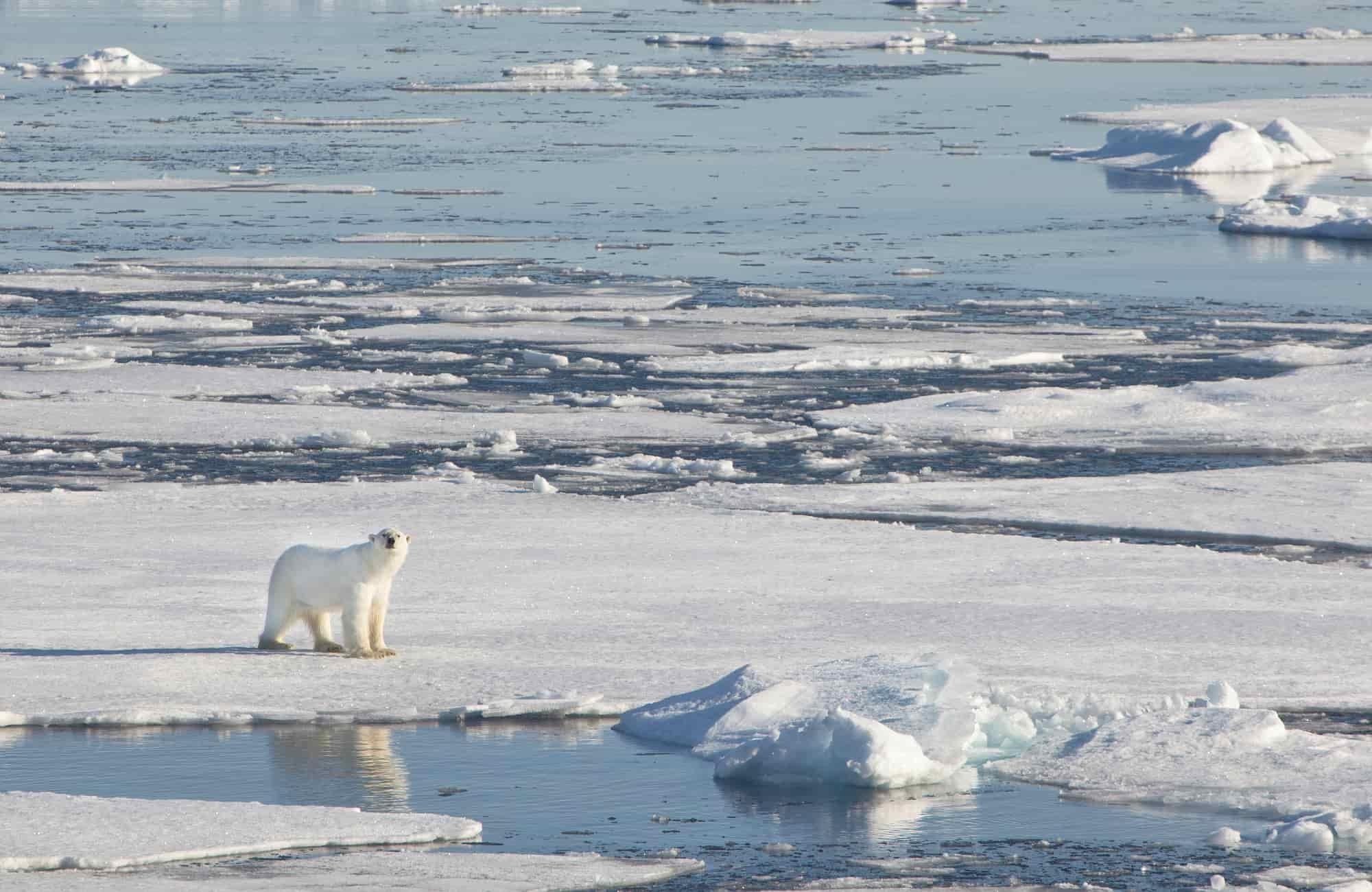 Voyage Svalbard - Royaume de l'ours polaire - Amplitudes