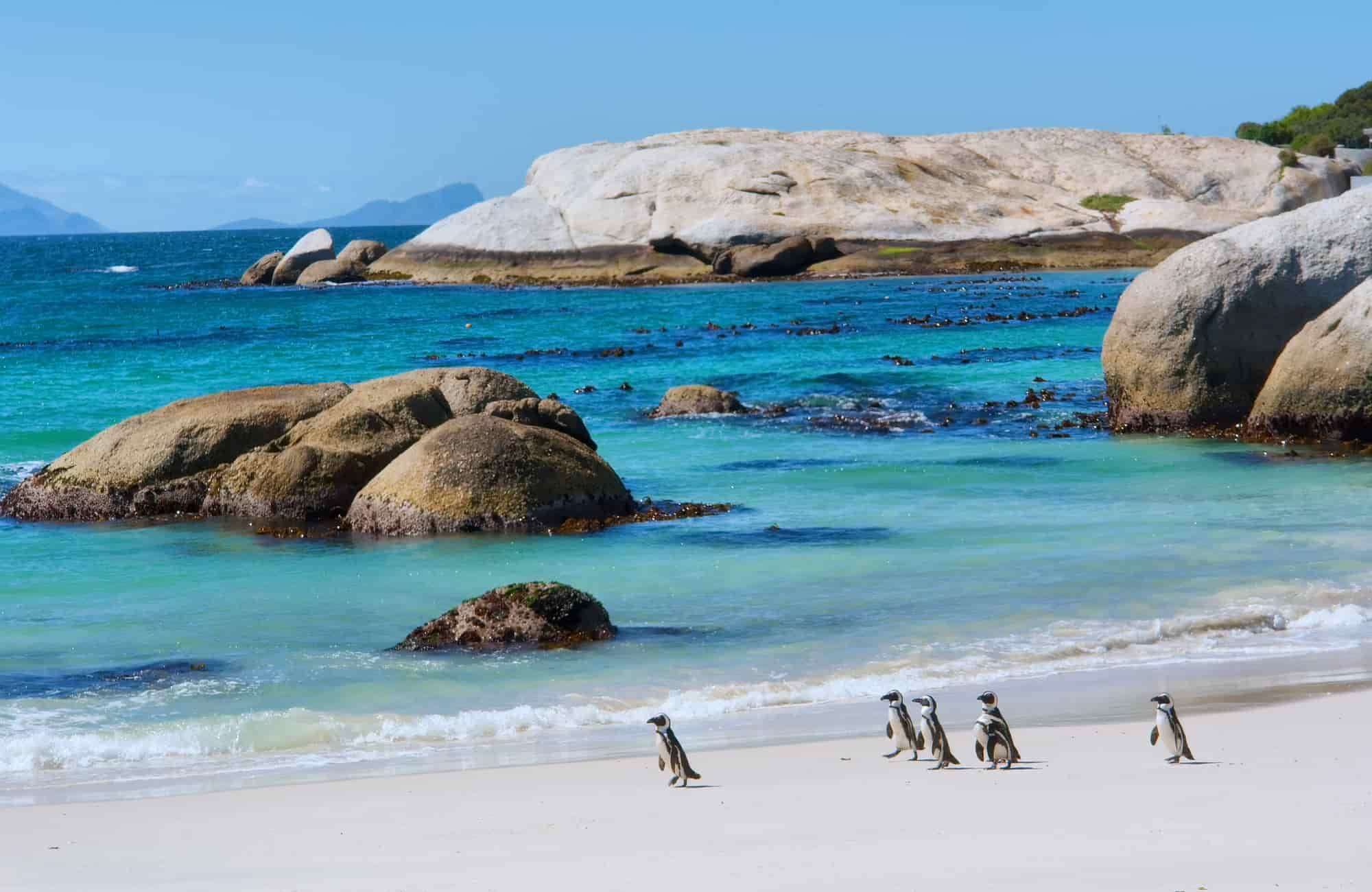 Voyage Afrique du Sud - Manchots du Cap - Amplitudes
