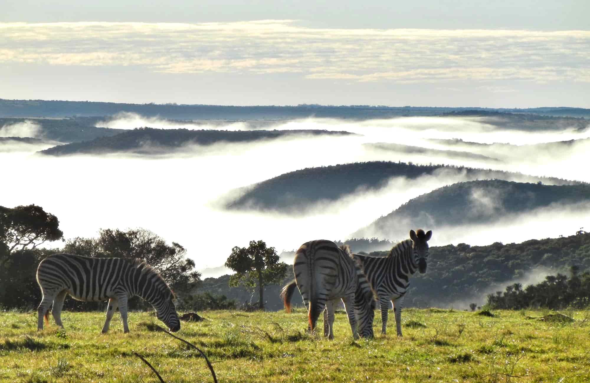 Voyage Afrique du Sud - Amplitudes