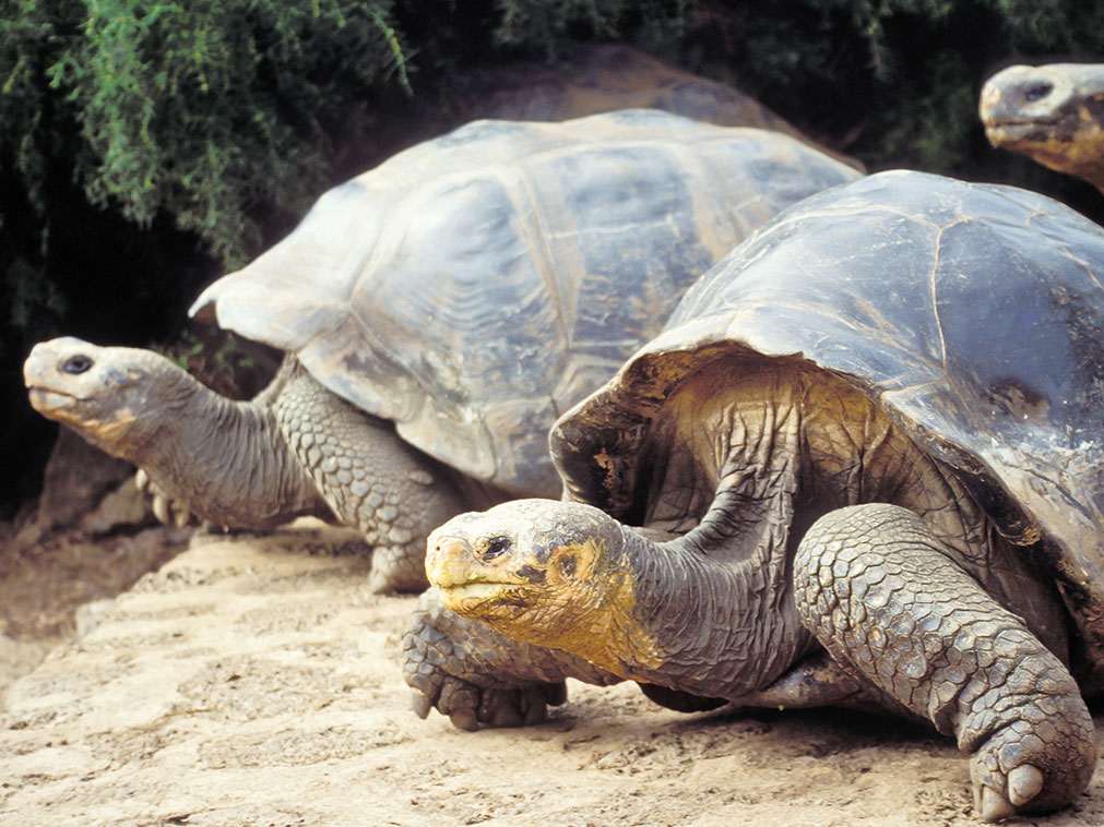 croisiere_galapagos_amplitudes_tortues