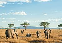 voyage_afrique_tanzanie_safari_individuel_privatif