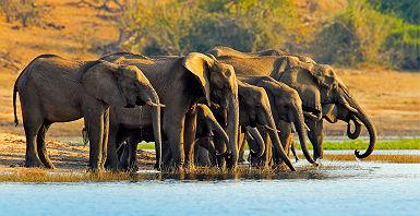 Botswana - Portrait d'un éléphant dans un lac au parc national Chobe