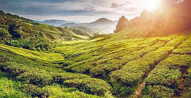 accroche-balades-malaisiennes