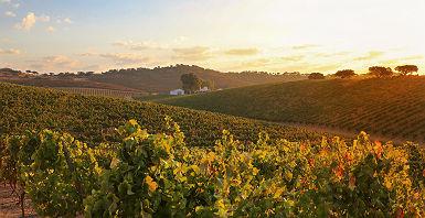 domaine_viticole_des_environs_de_monsaraz_portugal