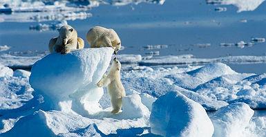 accroche-ile-aux-ours-blancs