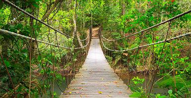 Pont suspendu dans le Parc national Khao Yai - Thaïlande