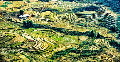 Vietnam - Vue sur les champs de riz à Sapa