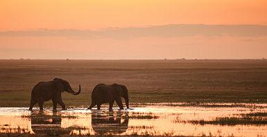 Afrique - Portrait de deux éléphants dans un lac au parc national Hwange