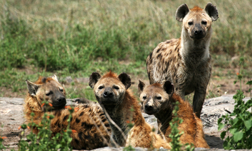 voyage_en_tanzanie_safari_parc_national_serengeti