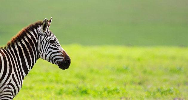 accroche-safari-tanzanie-plage-zanzibar
