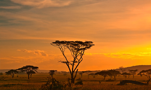 circuit_en_tanzanie_safari_parc_national_serengeti